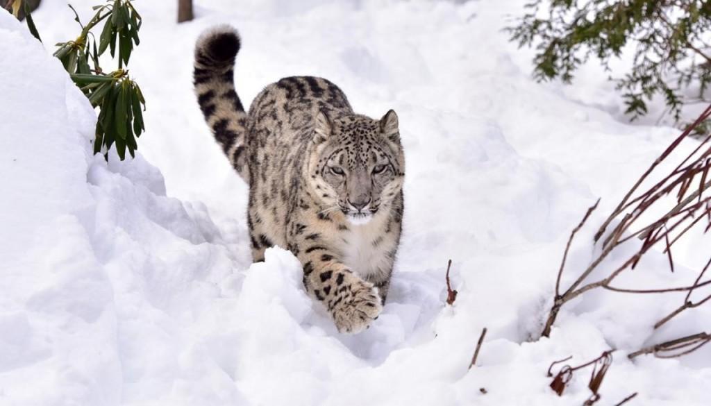ias4sure.com - Lippa-Asra wildlife sanctuary